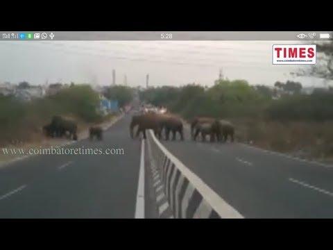 ooty elephant corridor