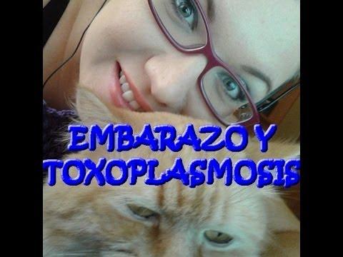 Toxoplasmosis, gatos y embarazo!!