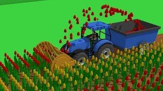 Springtime Blue #Tractor | The Story of the Tulips - Planting to Harvest | Traktor Zbiór Tulipanów