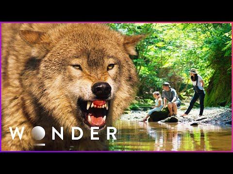 Surviving A Wild Cougar Attack | Human Prey S1 EP5 | Wonder
