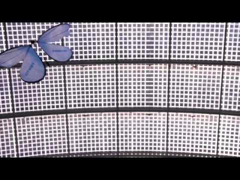 Robot kelebeklerle tanışın