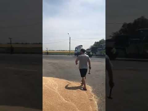 Возмущенный водитель разгрузил зерно прямо на трассе.