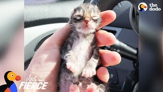 Newborn Kitten Who Was Frozen Solid Grows Up To Be Strong And Feisty | The Dodo Little But Fierce by The Dodo