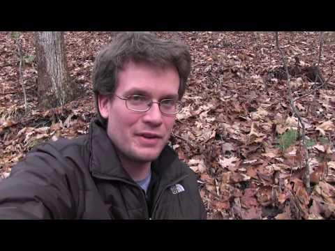 Goats Mating (видео)