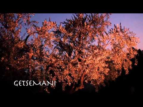 La Terra Santa secondo noi  (2° parte) - Fratesole Viaggeria Francescana