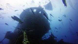The GoPro Hero 3+ Black and Backscatter Filp 3.1 filter system were used to make this time-lapse video of the aquatic life around Aquarius Reef Base.