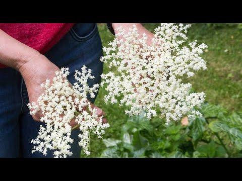 Unkraut zum Genießen: Ein Besuch in der Kräuterschule