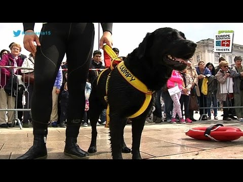bavisela 2015: cani salvataggio