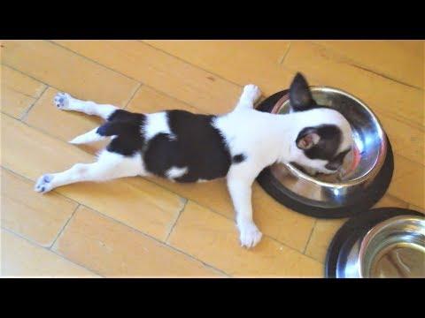 Приколы про собак и Новые Приколы с животными подборка 2018 Очень смешные и милые животные на видео (видео)