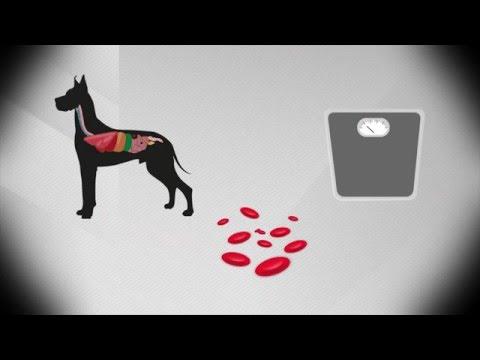 Infografía sobre la Ehrlichiosis Canina