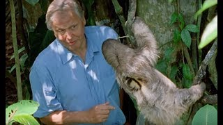 Attenborough Says Boo To A Sloth - Life Of Mammals - BBC Earth