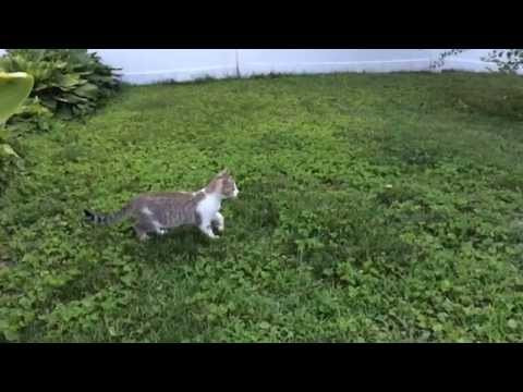 Our kittens, Luke and Leia, love to fight. Got one attack in slow motion.
