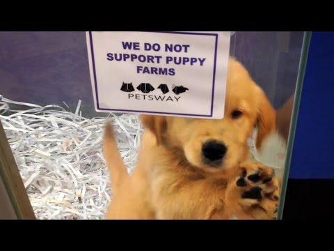 Le fabbriche dei cuccioli - Un business planetario