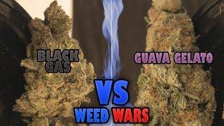 WEED WARS: Black Gas vs Guava Gelato by Urban Grower