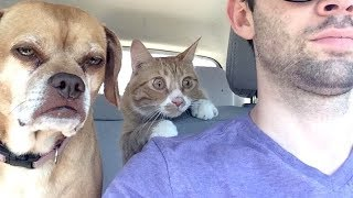 Video IF YOU go WITHOUT laughing you WILL GET A MEDAL - FUNNY DOG compilation MP3, 3GP, MP4, WEBM, AVI, FLV Agustus 2018