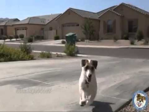 Clever Dog