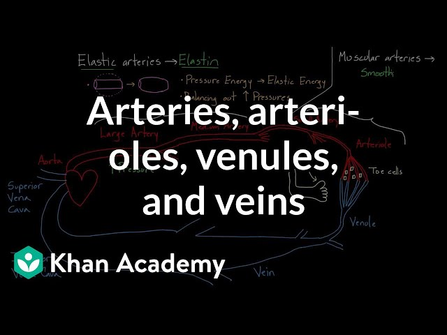What's the difference between arteries and veins?