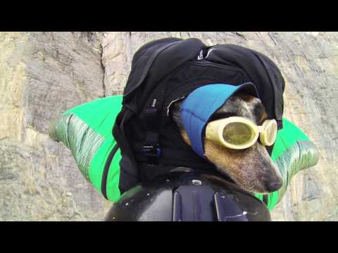 World s First Wingsuit BASE Jumping Dog