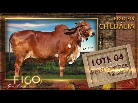 LOTE 04 - FIGO FIV CHEDÁLIA