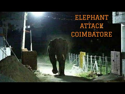Video Elephant Attack Coimbatore download in MP3, 3GP, MP4, WEBM, AVI, FLV January 2017