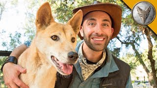 Dingo Meets a Coyote! by Brave Wilderness