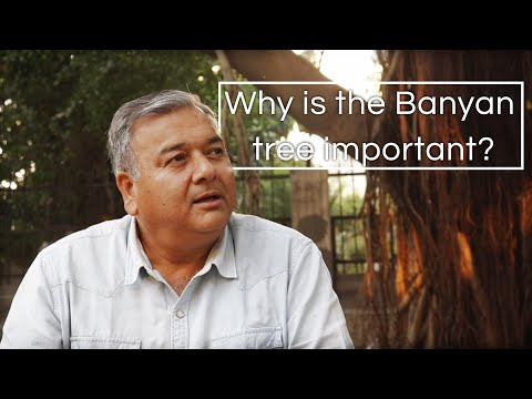 Why is the Banyan tree considered so important?