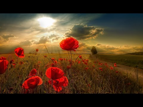 3 HOURS Romantic Relaxing Saxophone Music. Healing Background for Stress Relief, Study, Love, Cafe
