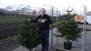 #547 Die Ethik des Weihnachtsbaumkaufs