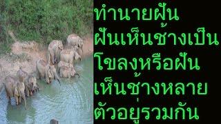 ฝันเห็นช้างทั้งโขลง หรือ ฝันเห็นช้างหลายตัวอยู่รวมกัน ทำนายได้ว่า ความร่ำรวยมหาศาลจะมาสู่ท่าน ถ้าฝันเห็นช้างเพียงตัวเดียว ทำนายได้ว่า ท่านจะได้รับการสนับสนุน...