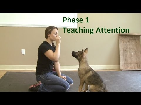 10 Dog-Training Tricks from the Dog Whisperer That Will Change Your Life recommend