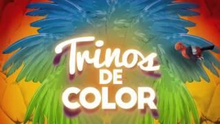 Informativo 58 Feria de Cali 2015 - Alumbrado