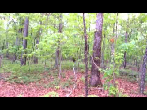 41.6 acres Adairsville, GA