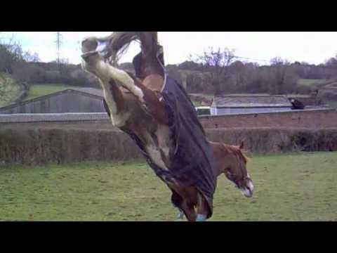 Horse going crazy in field