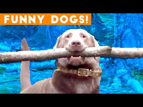 Ultimate FUNNY DOG Compilation 2018 | Funny Pet Videos