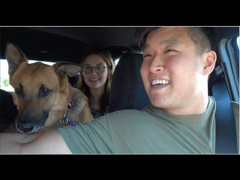 ADOPTING A NEW DOG!