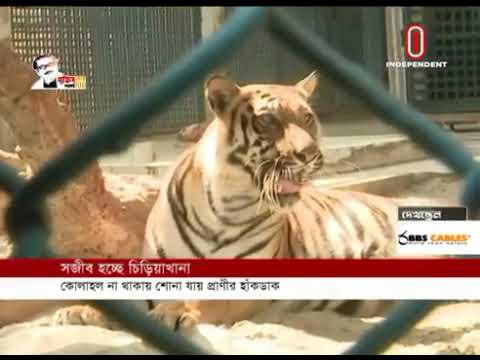 With no people in sight, animals seem to be having time of their lives(08-05-20) C/O: Independent TV