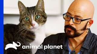 Jackson Helps Cat With Kidney Disease Get Healthier | My Cat From Hell by Animal Planet