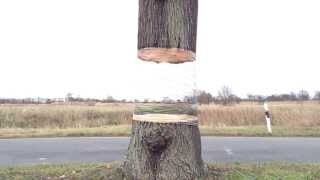 Illusion Painting On A Tree
