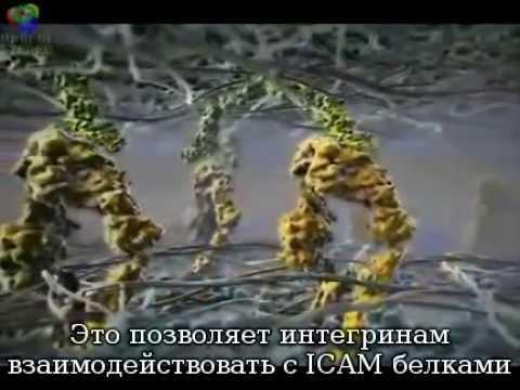 Сенсация! Появилась косметика для клеток человека.