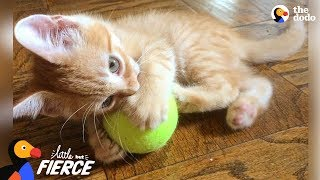 One-Pound Kitten Is SUCH A Survivor | The Dodo Little But Fierce by The Dodo
