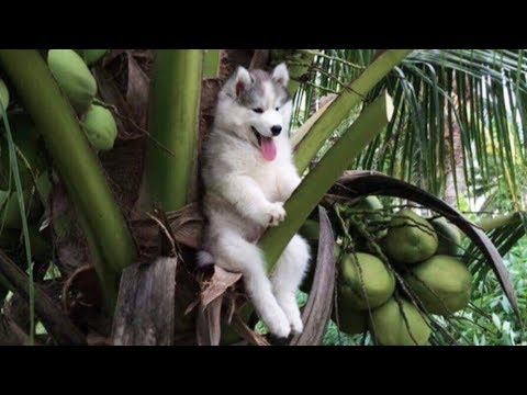 Funny cat videos - Cute is Not Enough - Funny Cats and Dogs Compilation #205
