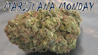 Zkittlez Marijuana Monday by Urban Grower