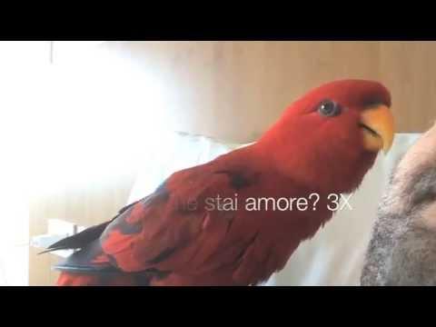 rebecca, il pappagallo parlante