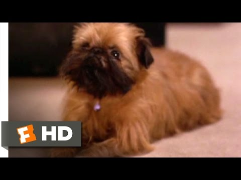 As Good as It Gets (2/8) Movie CLIP - Verdell the Dog (1997) HD