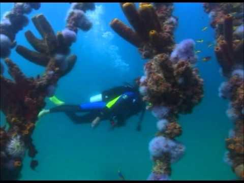 Extrañas criaturas bajo las aguas de Aruba