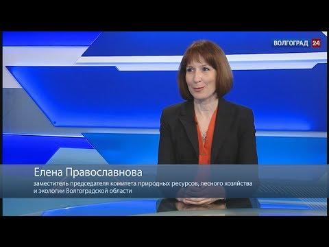 Елена Православнова, заместитель председателя комитета природных ресурсов, лесного хозяйства и экологии Волгоградской области