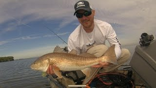 Motive Outdoors Tampa Bay Redfish Remix! Kayak Sight Fishing Redfish Skinny Water