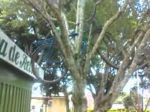 Árvore de fruto estranho em Vianópolis -go