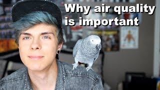 How the Air in Your Home Could be Killing Your Pet Birds! *What to do* by Tyler Rugge