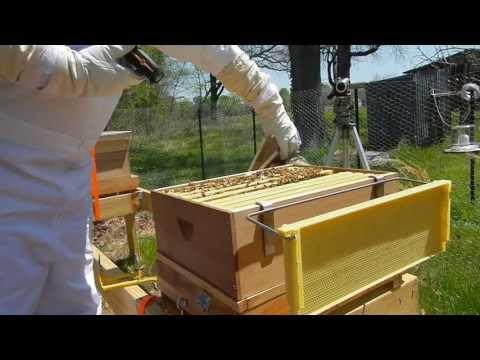 Metropolis Of Propolis Episode 7 1st Full Hive Inspection